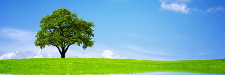 /db_assets/images/blog_cover/go-green-30037-750x250.jpg