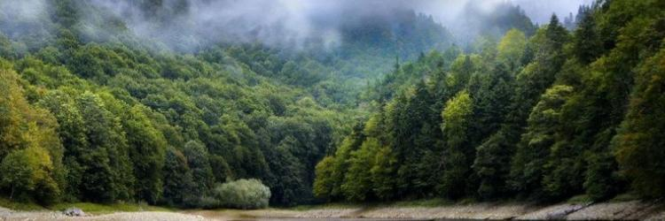 /db_assets/images/blog_cover/nationalpark-biogradska-gora-110775-750x250.jpg